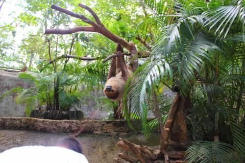 Открытый зоопарк Khao Kheow Open Zoo (русс. Кхао Кхео)