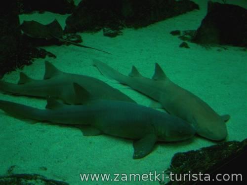 Канкун - среди кораллов и спящих акул.