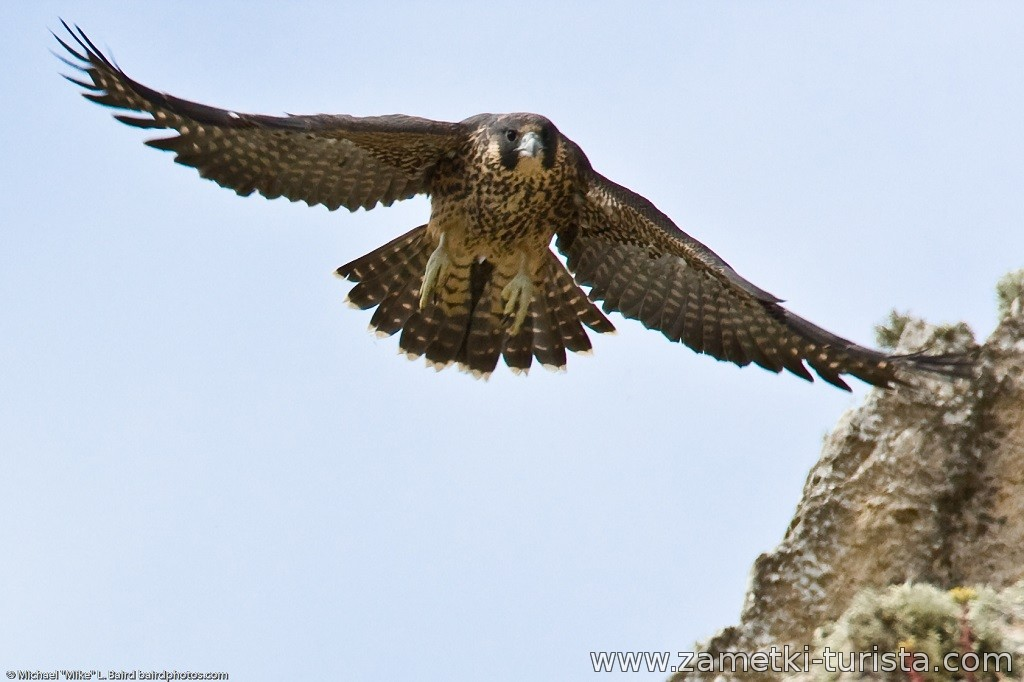 Андора, фауна, Орел