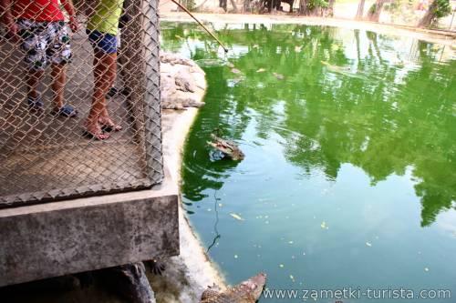 Отзыв о поездке на экскурсию Крокодиловоя ферма и Парк миллионлетних камней в Таиланде