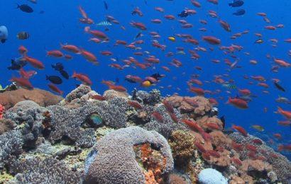 Где самый лучший дайвинг на Бали.