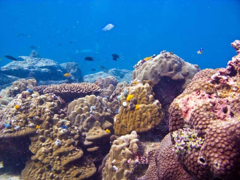 кораллы море рыбы дайвинг снорклинг