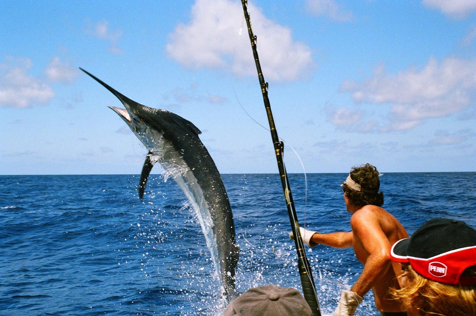 Маврикий, остров, рыбалка, мерлин