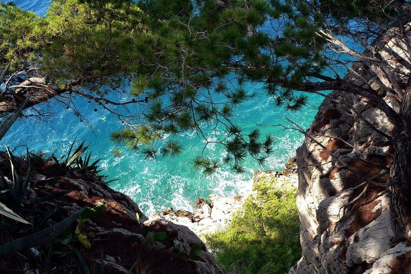 Хорватия, Адриатическое море, сосны