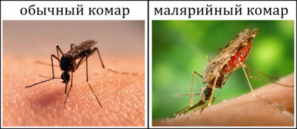 отличие обычного комара и малярийного