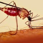 Малярия в Таиланде (Тайланде). Видео.