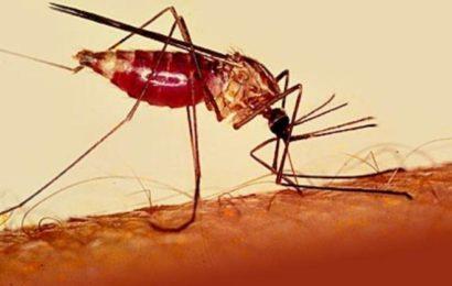 Малярия в Тайланде