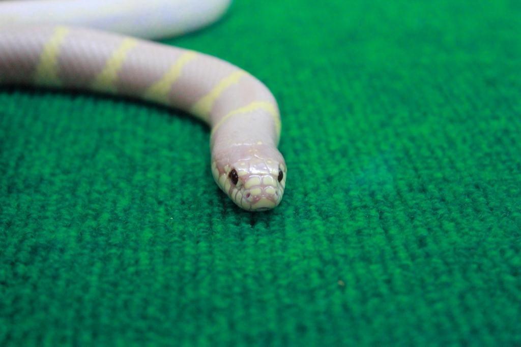 Змеинное шоу