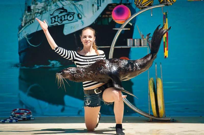 Анапа, курорты России, отдых в Анапе, достопримечательности Анапы, развлечения для детей в Анапе, дельфинарий Немо
