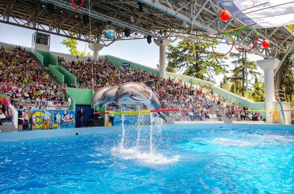 Сочи, Россия, достопримечательности, развлечения, дельфинарий Сочи