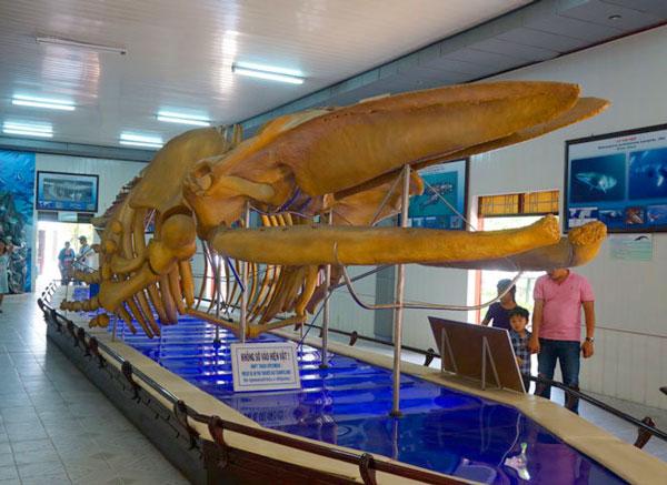 Национальный океанографический музей Вьетнама
